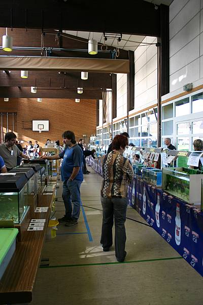 Stand Aquariumverein Amazonas Saarbrücken