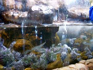AquaDings: Sea Life Speyer