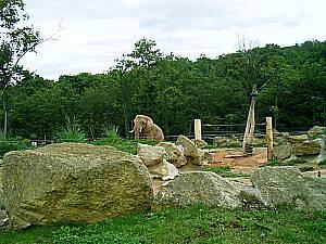 Elefantengehege