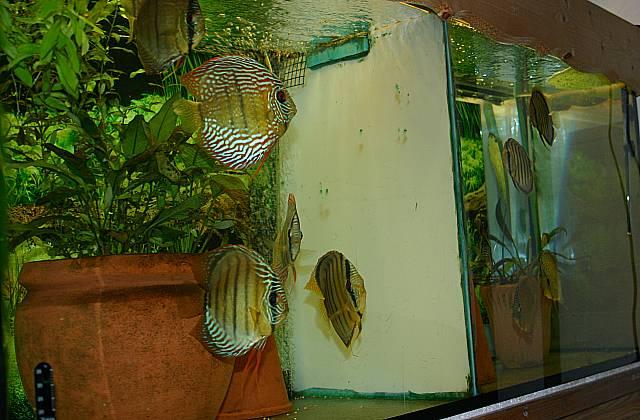 Karatänebecken